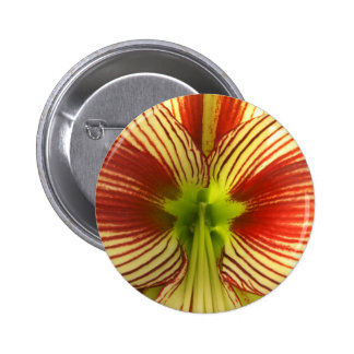 Butterfly Amaryllis Button