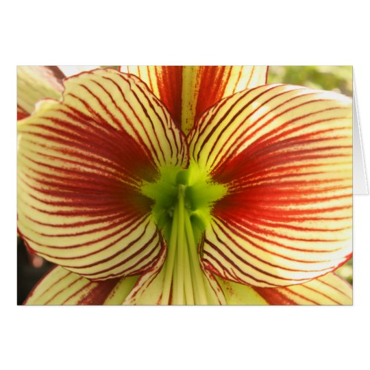 Butterfly Amaryllis Card