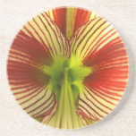 Butterfly Amaryllis Drink Coaster