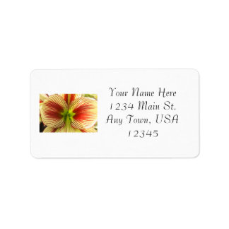 Butterfly Amaryllis Label
