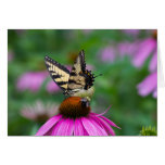 Butterfly and Bee Greeting Cards