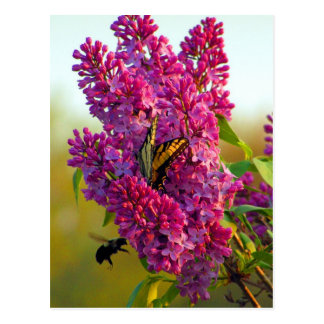 Butterfly and Bee on Lilac Postcard