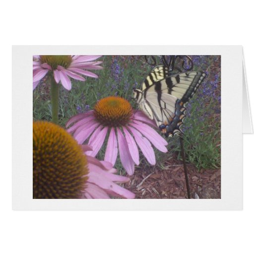 Butterfly and Coneflower Card