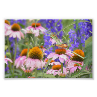 Butterfly and Daisies Posters