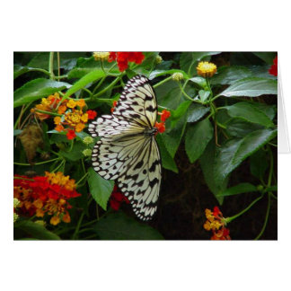 Butterfly and Flowers Hi/Hello Greeting Card