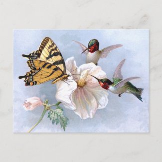 Butterfly and Hummingbirds