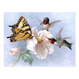 Butterfly and Hummingbirds Postcards