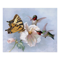 Butterfly and Hummingbirds Poster