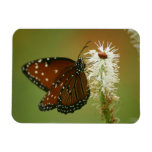 Butterfly and Ladybug Rectangular Magnet