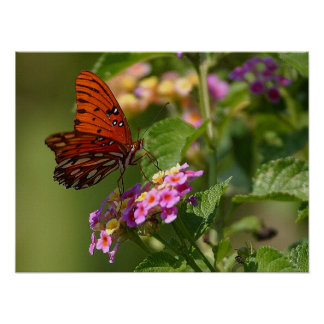 Butterfly and Lantana Poster