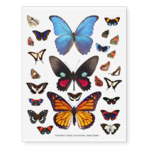 Butterfly and Moth Illustration Temporary Tattoos