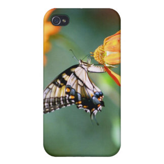Butterfly and Orange Flower iPhone 4/4S Cases