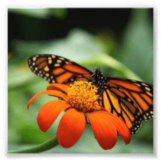 Butterfly and Orange Flower Photo Art