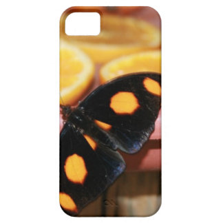 Butterfly and Oranges Wildlife Photo iPhone SE/5/5s Case