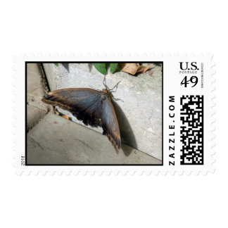 Butterfly and stone postage stamp