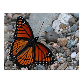 Butterfly and Stones Postcard