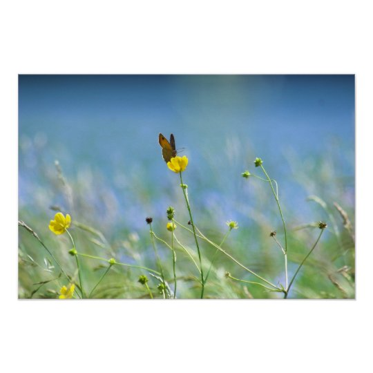 Butterfly and the Linseed Field Poster
