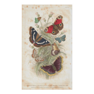 Butterfly Antique Lithograph print