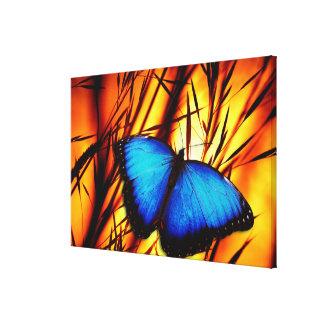 Butterfly Art 39 Options Canvas Print