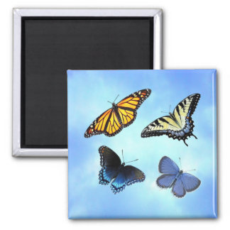 Butterfly Assortment Square Magnet
