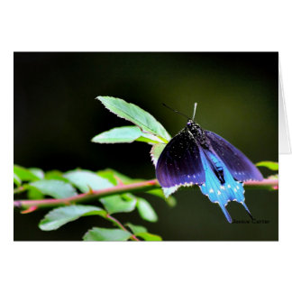 Butterfly at Rest Stationery Note Card