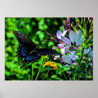 Butterfly - August Garden Joy Poster