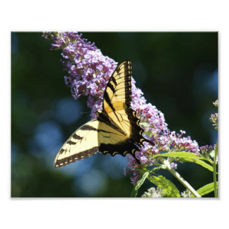 Butterfly Beauty 10x8 Photographic Print