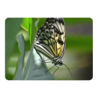 Butterfly Beauty Card