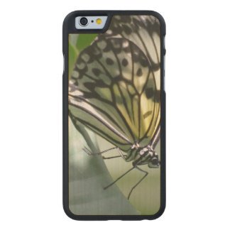 Butterfly Beauty Carved Maple iPhone 6 Slim Case