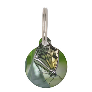 Butterfly Beauty Pet ID Tag