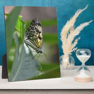 Butterfly Beauty Plaque