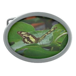 Butterfly Oval Belt Buckle