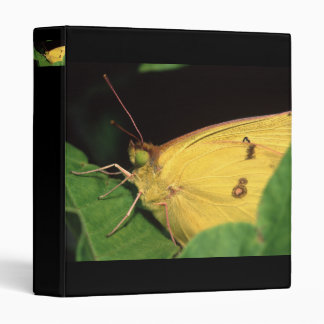 butterfly 3 ring binders