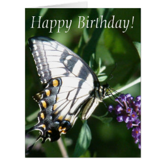 Butterfly Birthday Big Greeting Card