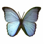 Butterfly Blue Freiburg Germany The MUSEUM Zazzle  Acrylic Cut Outs