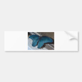 butterfly blue insect flying beautiful wings bumper sticker