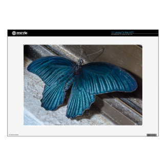 "butterfly blue insect flying beautiful wings decals for 15"" laptops"