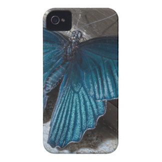 butterfly blue insect flying beautiful wings iPhone 4 cover