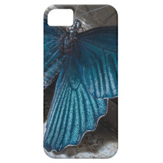 butterfly blue insect flying beautiful wings iPhone SE/5/5s case