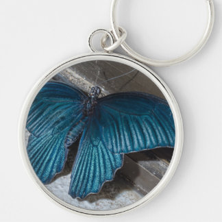 butterfly blue insect flying beautiful wings keychain