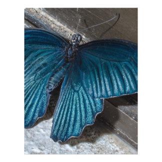 butterfly blue insect flying beautiful wings letterhead