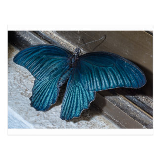 butterfly blue insect flying beautiful wings postcard