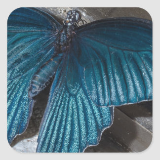 butterfly blue insect flying beautiful wings square sticker