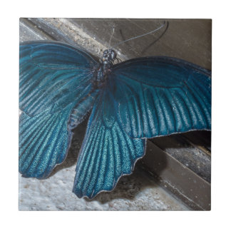 butterfly blue insect flying beautiful wings tiles