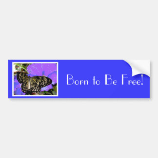 Butterfly Born To Be Free Bumper Sticker