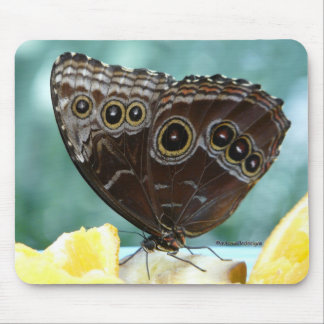 Butterfly Breakfast Mouse Pad