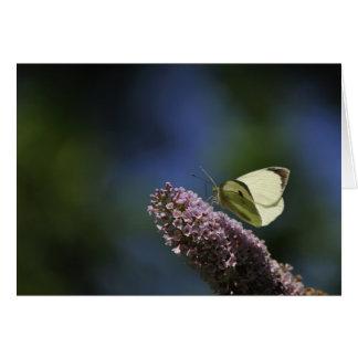 Butterfly Bush Card