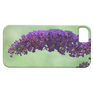 Butterfly Bush Case For iPhone 5/5S