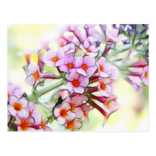 Butterfly Bush - Delicate and Dreamy Postcard