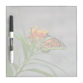 butterfly bush monarch behind . dry erase whiteboard